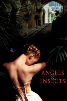 Affiche du film Angels and Insects
