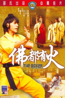 Affiche du film The Boxer from the Temple
