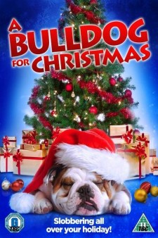 A Bulldog for Christmas