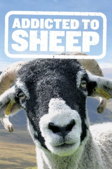 Affiche du film Addicted to Sheep