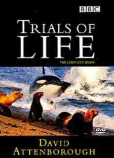 Affiche du film The Trials of Life