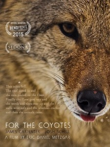 For the Coyotes