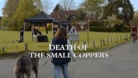 Death of the Small Coppers