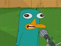 Interview With a Platypus