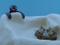 Pingu and the Birds' Mother