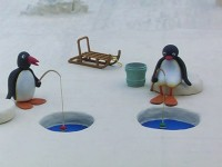 Pingu has a Fishing Competition
