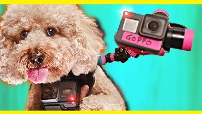 GoPro on a Dog!