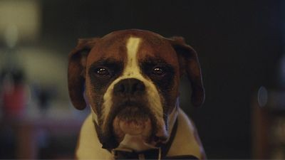 John Lewis - Buster the Boxer